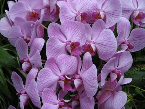 NC Piedmont Orchid Show Jan 14-16