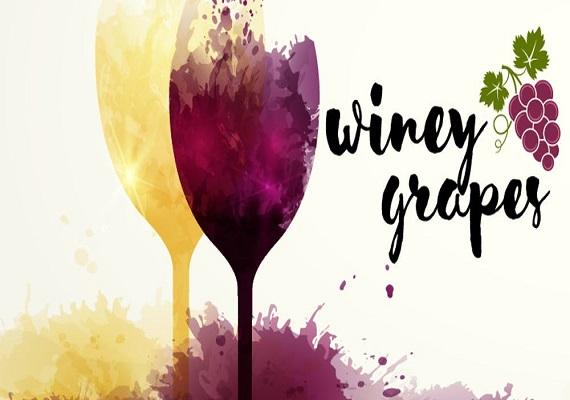 Winey Grapes Charlotte